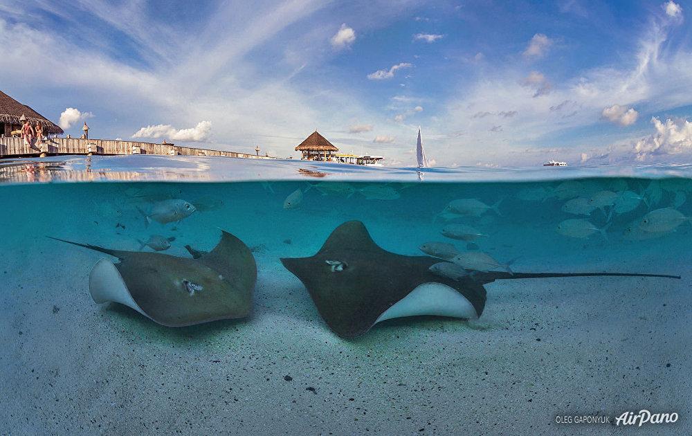 El mundo submarino de las Maldivas