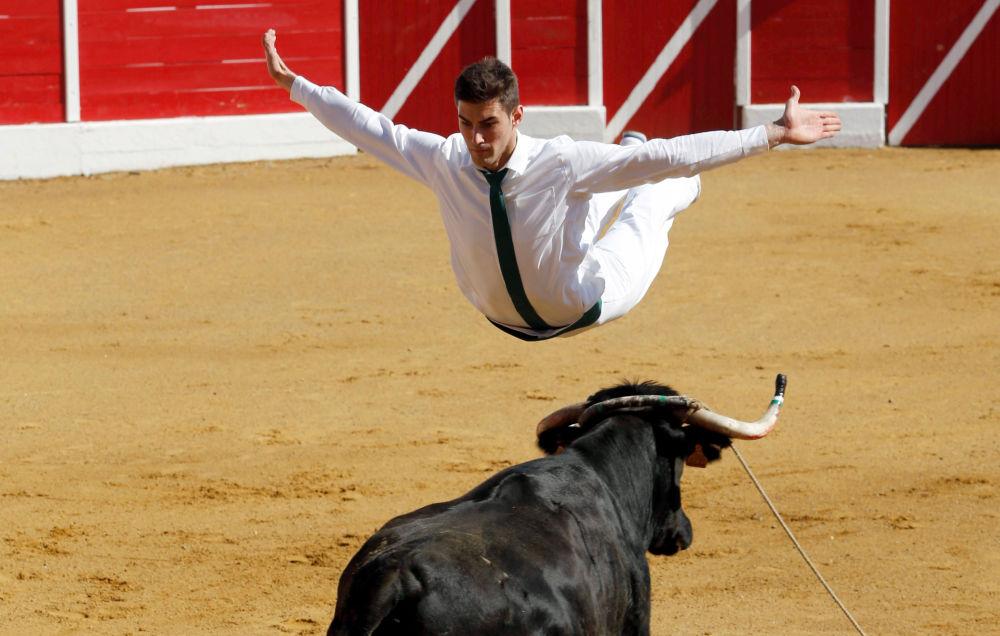 Un participante de la corrida Course landaise salta sobre un toro