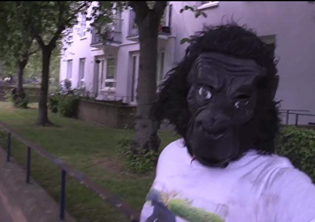 Señor Gorila