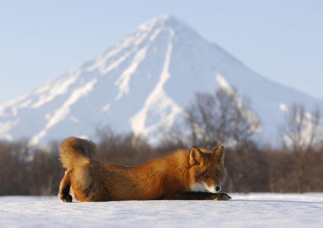 Una mirada a la reserva natural de Kamchatka a través de sus ocho volcanes