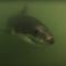 Los marineros graban un tenso encuentro con tiburones blancos
