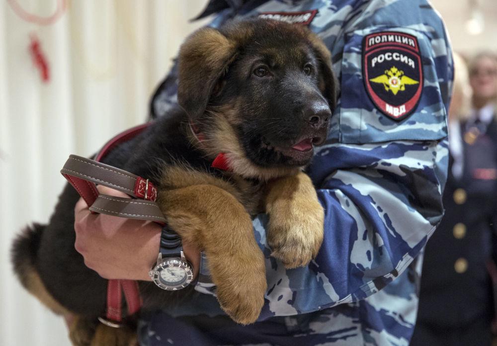 Renos, lagartos y conejillos de Indias: animales al servicio de la policía