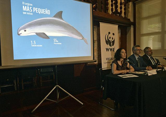 WWF presenta el informe sobre vaquita marina
