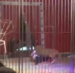 Fuertes imágenes: león ataca a su domador en pleno espectáculo en Francia