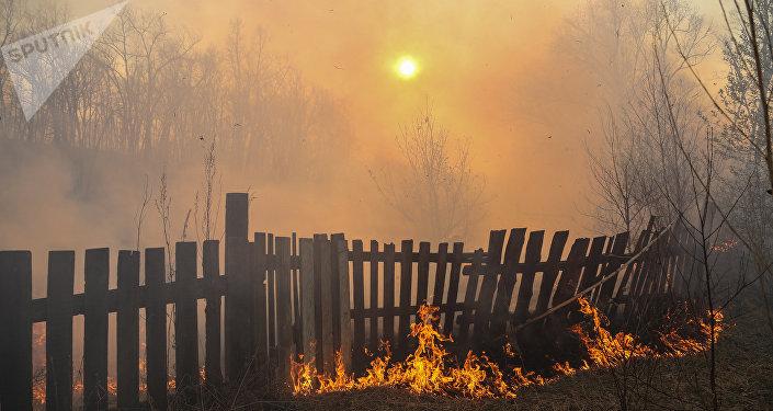 Incendios forestales en Lejano Oriente de Rusia