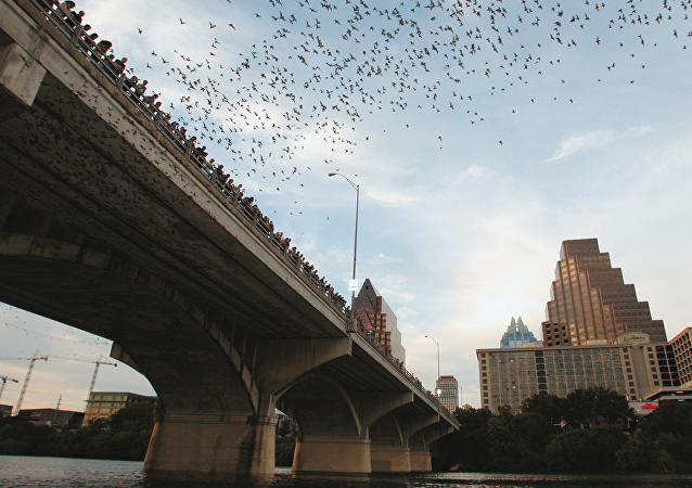 Murciélagos salen desde debajo del puente Congress Avenue en Texas