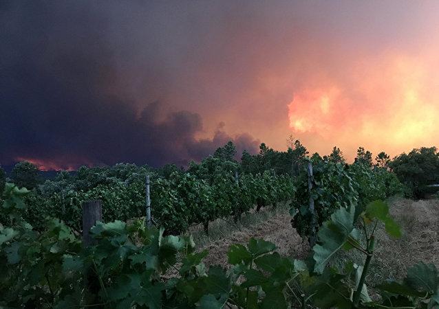 Un incendio forestal en Portugal
