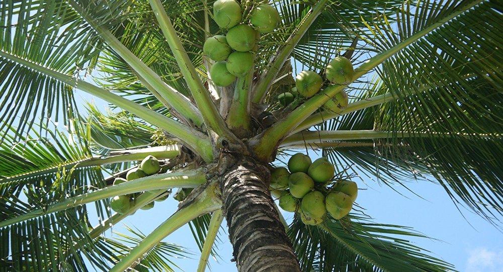 El aceite de coco no es bueno para tu salud