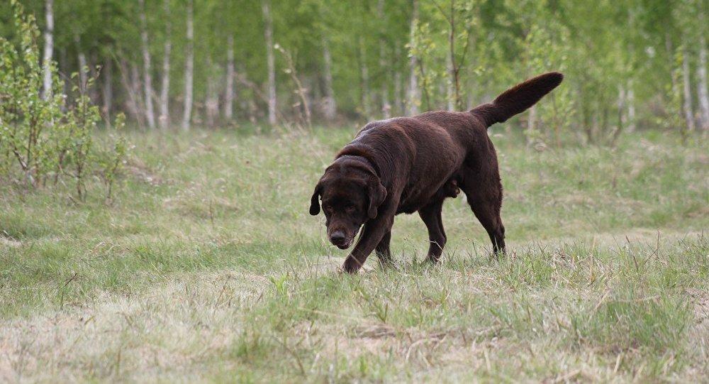 Camila, la perra heroína que encontró los cuerpos