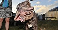 Coronan en EEUU al perro más feo del mundo