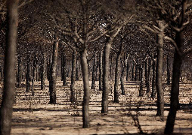 Árboles quemados (imagen referencial)