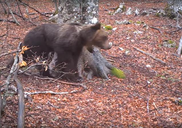 Vídeo: la sorprendente 'vida secreta' de un árbol durante un año
