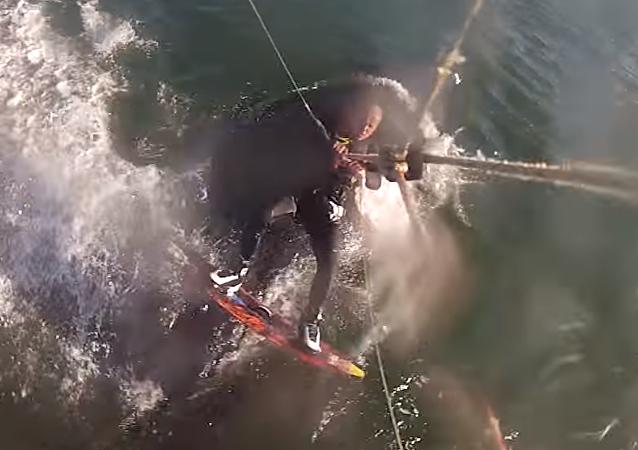 Una ballena jorobada se le atraviesa a un deportista ruso