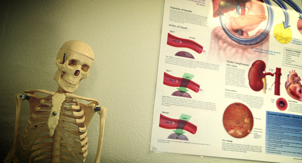 Órganos internos (imagen referencial)