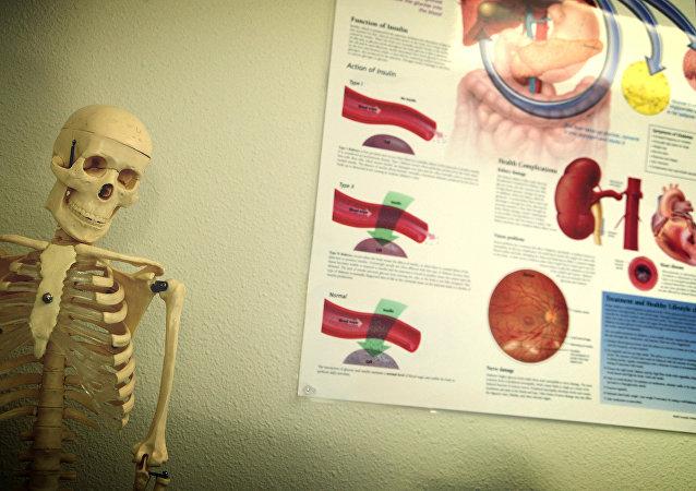 Órganos internos