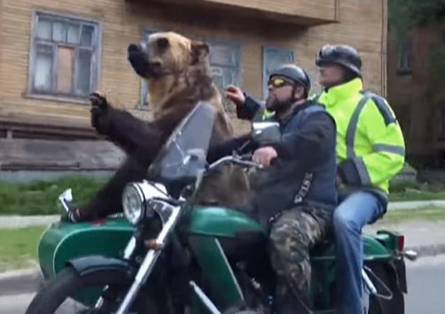 Mientras tanto, en Rusia: un oso pasea en sidecar por las calles de Arjánguelsk