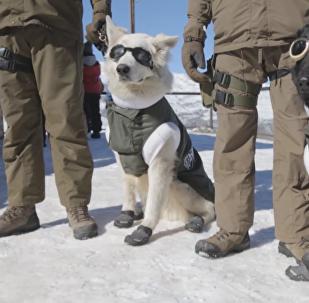 Perros-policías en Chile
