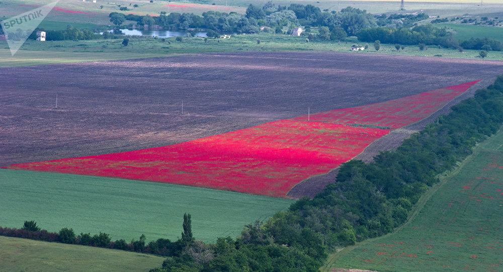La agricultura de Crimea