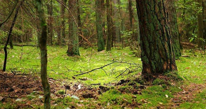 Un bosque (imagen referencial)
