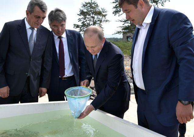 Ómul y té de mosqueta: la visita de Putin al lago Baikal
