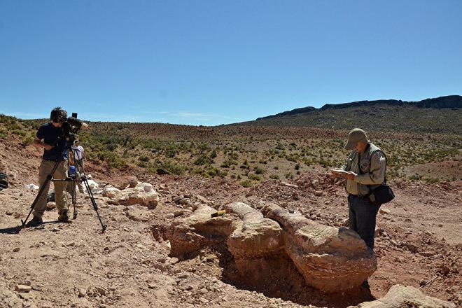Científicos estudian los restos de Patagotitan mayorum encontrado en Patagonia, Argentina