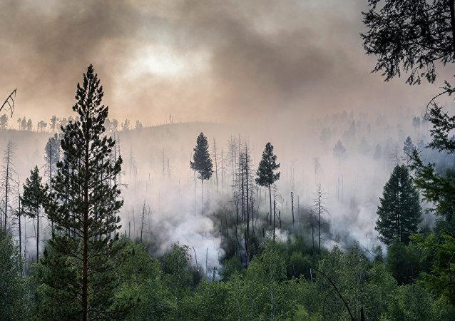 Incendios forestales en el Lejano Oriente ruso