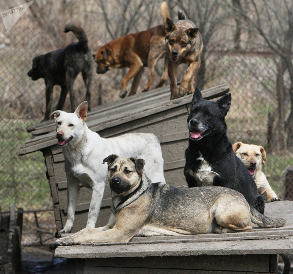 Perros (imagen referencial)