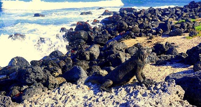 Iguana disfruta el sol en las Islas Galápagos