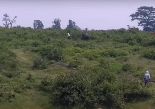 Un elefante aplasta a un hombre mientras se toma una selfi