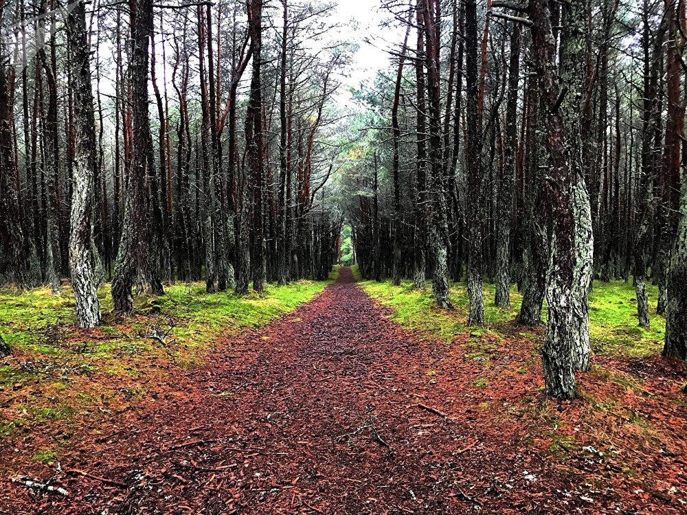 Bosques del Parque Natural del Istmo de Curlandia
