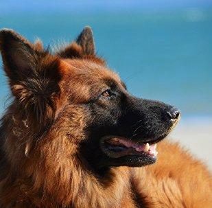 Un perro (imagen referencial)