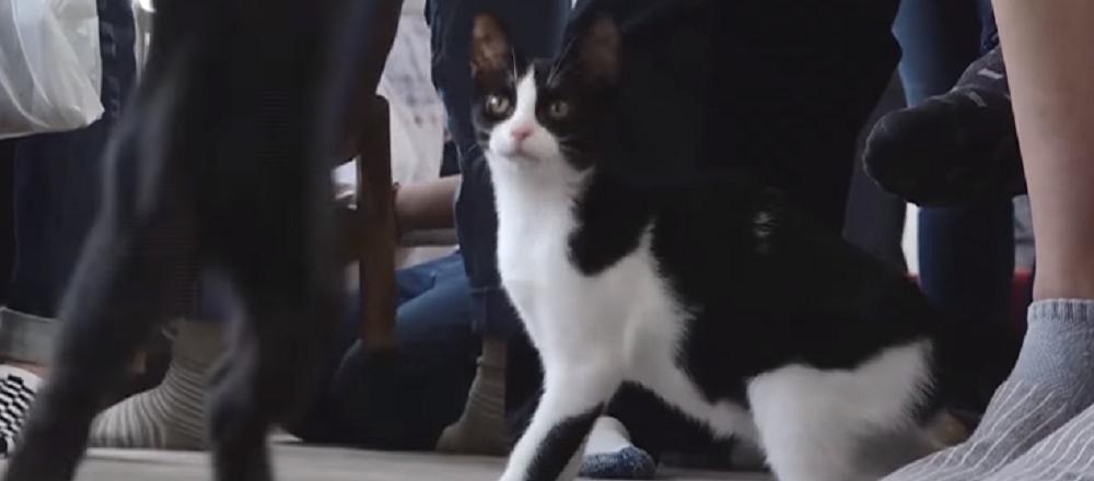 En Japón lanzan el primer 'ferrocarril felino'