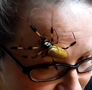 Una espeluznante araña
