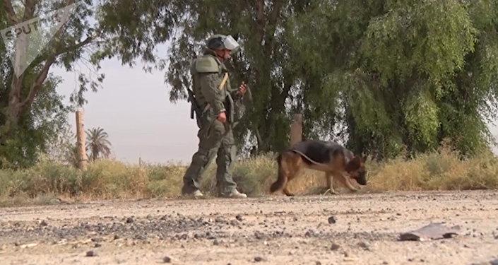 Trabajo duro y altamente peligroso: así los zapadores rusos desminan Deir Ezzor