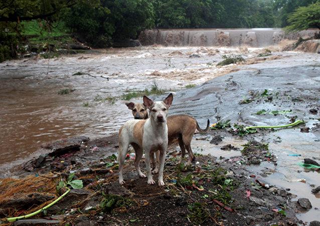 Las consecuencias de la tormenta tropical Nate en Nicaragua