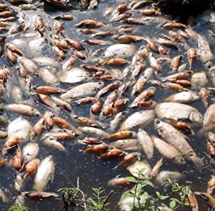 Entre 5.000 y 10.000 peces han sido hallados muertos en el río Confuso