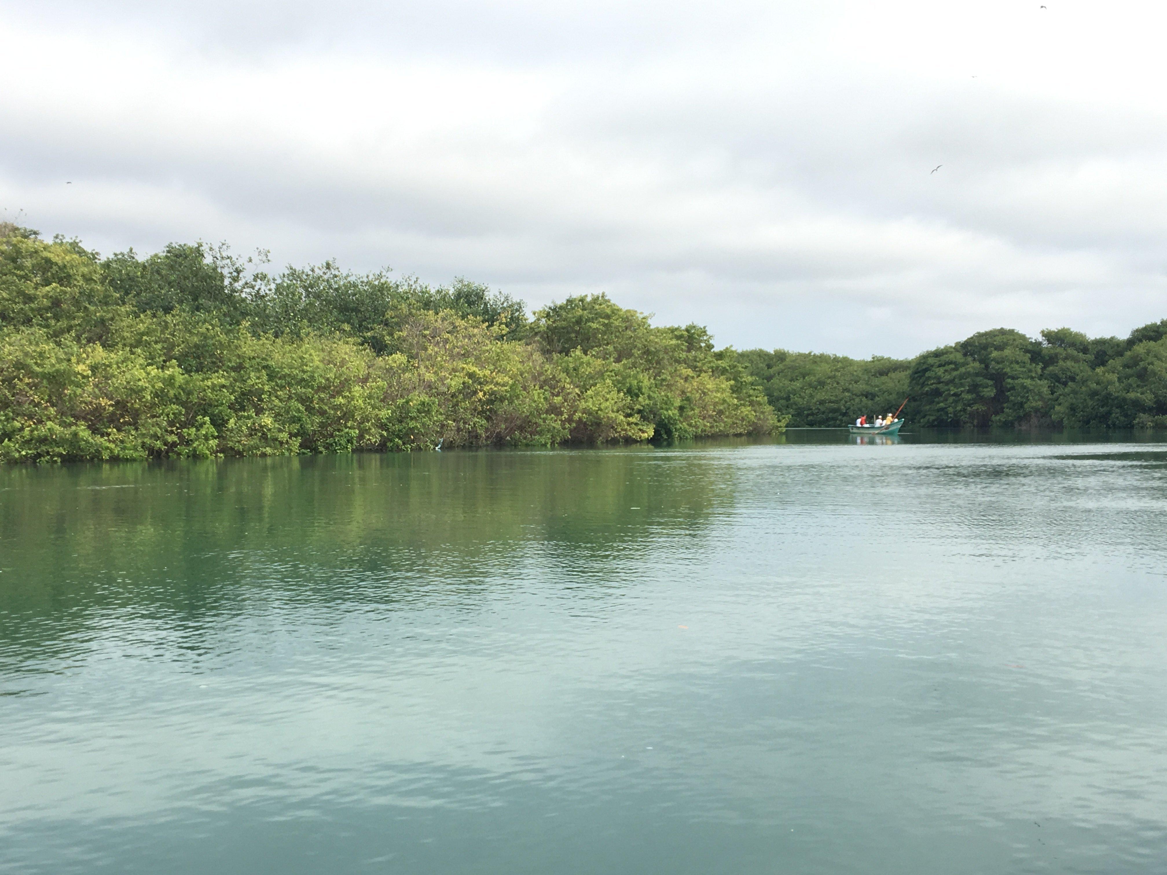 Vista desde la embarcación hacia el manglar La Boca que alberga a cientos de aves, en Manabí.