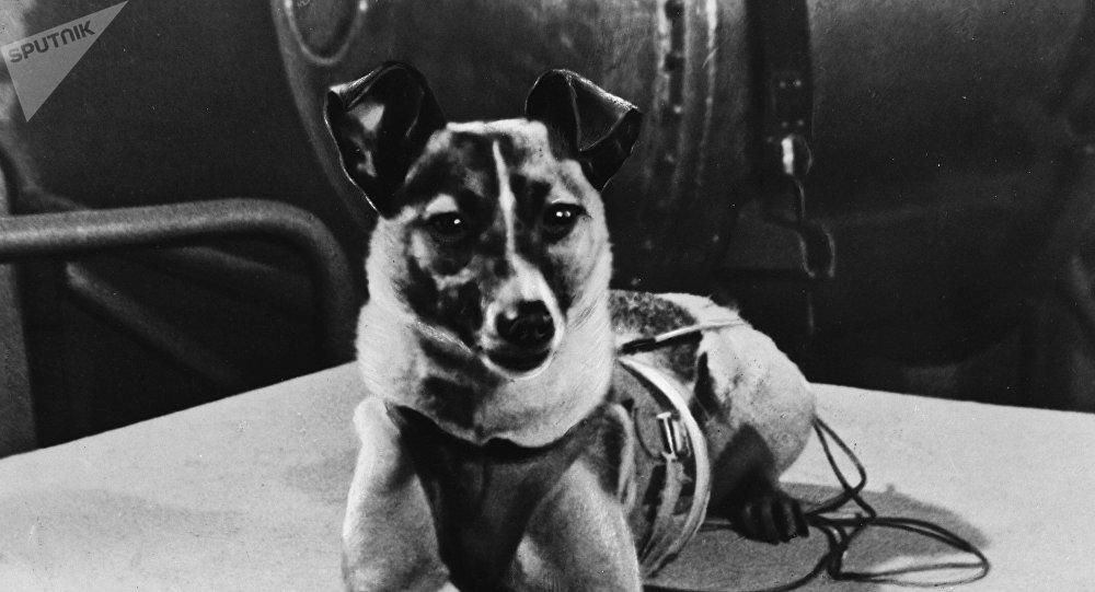 Laika, perra cosmonauta