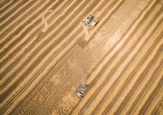 Cosecha de trigo (imagen referencial)