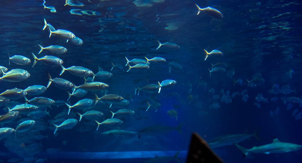 Un enjambre de peces (imagen referencial)