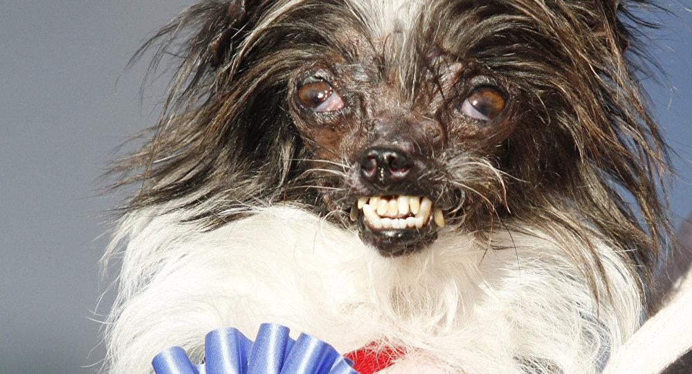 Peanut, el perro más feo del mundo, en 2013