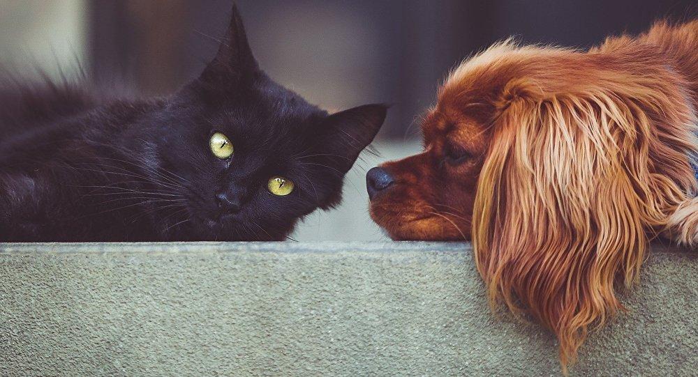 Gatos o perros, ¿Quién es el más inteligente?