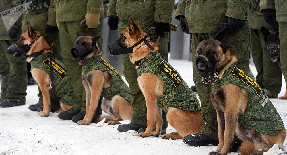 Perros de la Policía rusa (Archivo)