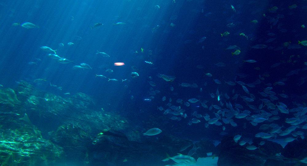 El fondo marino (imagen referencial)