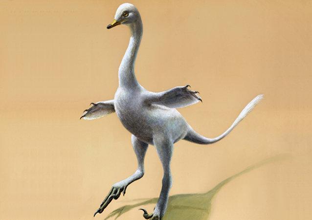 Halszkaraptor escuilliei, reconstrucción