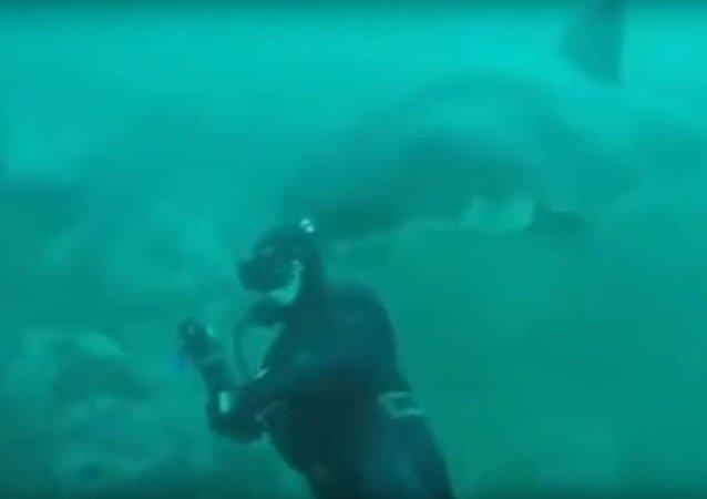 Un tiburón cerca de un buzo