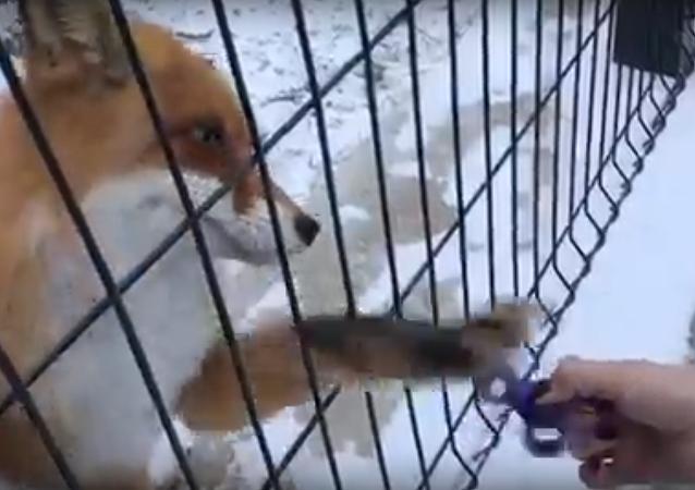 El vicio del 'spinner' llega al mundo animal