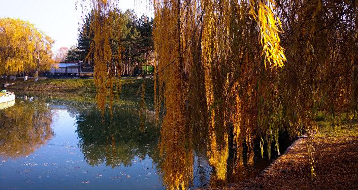 El parque adyacente al sanatorio Mashuk Aqua-Therm