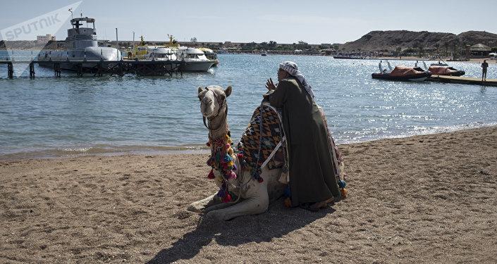 Un camello en la playa de Egipto