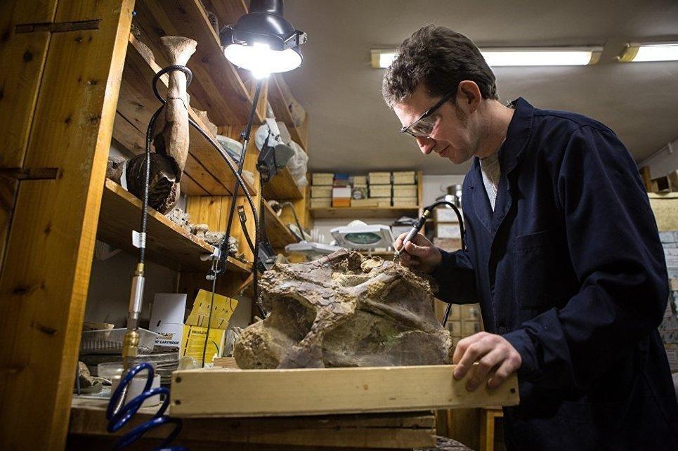 Un arqueólogo estudia los restos de un titanosaurio